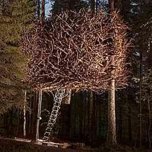 Viviendo en la copa de los árboles 2