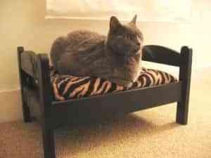 Camas para gatos 2