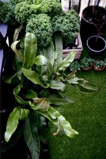 Un jardín en el balcón 2
