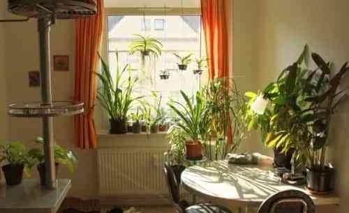 Consejos para decorar con plantas decoraci n de for Consejos para decoracion de interiores