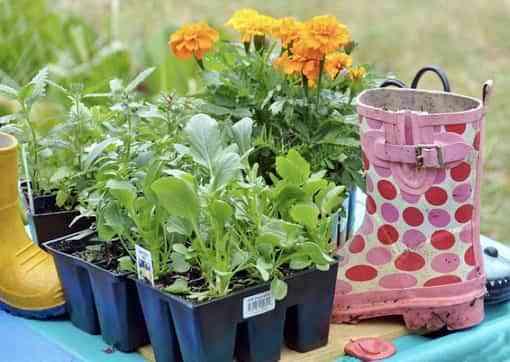 Recicla botas de lluvia en macetas para flores