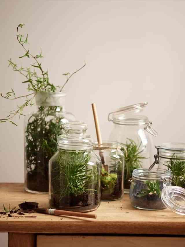 Decorar con jardines en frascos de vidrio