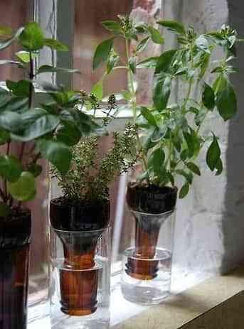 plantas para el interior de casa -