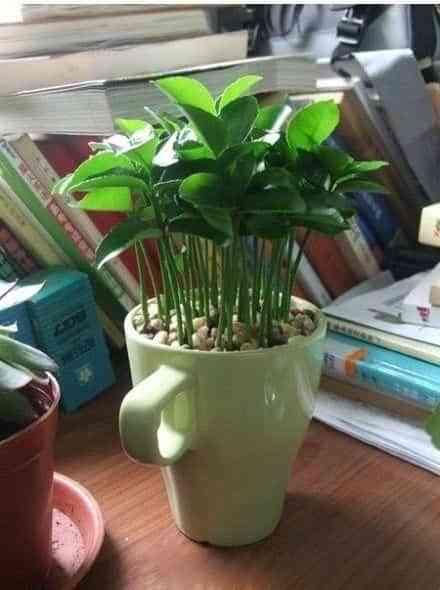Decorar el dormitorio con una planta de lim n decoraci n - Plantas para dormitorio ...