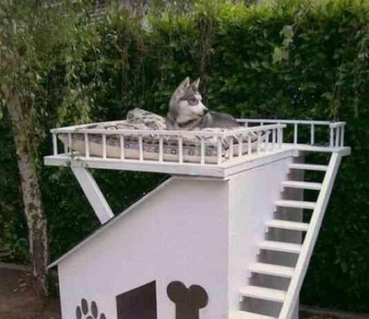 casa para perros