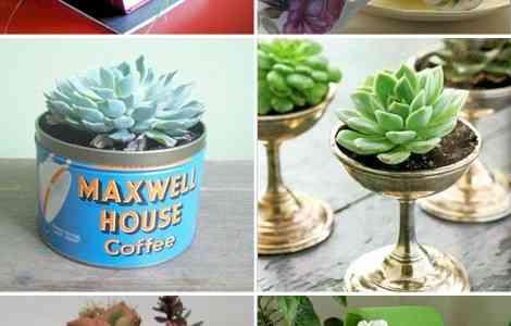 Ideas para decorar con pequeñas plantas