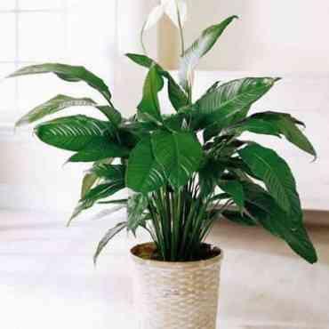 Consejos para limpiar tus plantas decorativas