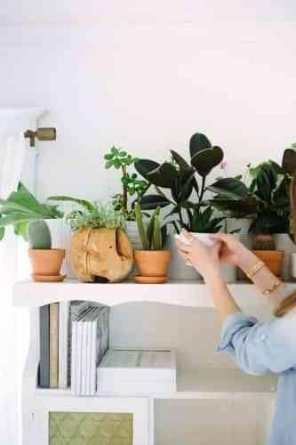decorar dormitorios con plantas