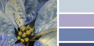 decorar con color azul