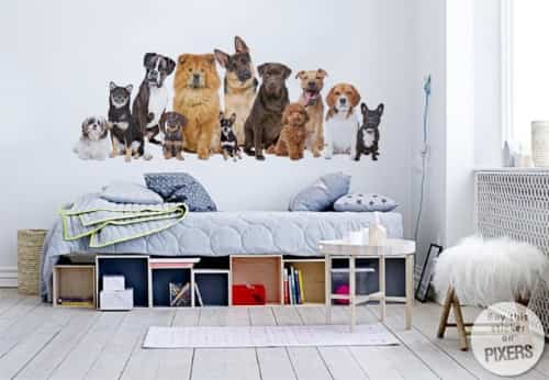 fotomurales de perros