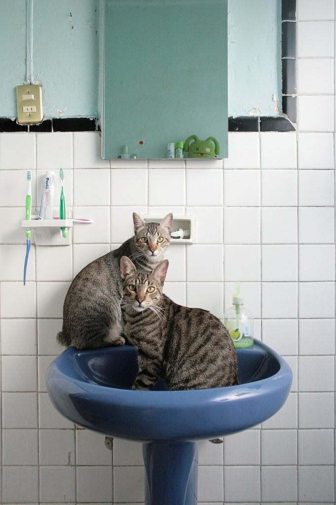 Trucos de limpieza caseros azulejos brillantes - Trucos para limpiar azulejos de cocina ...