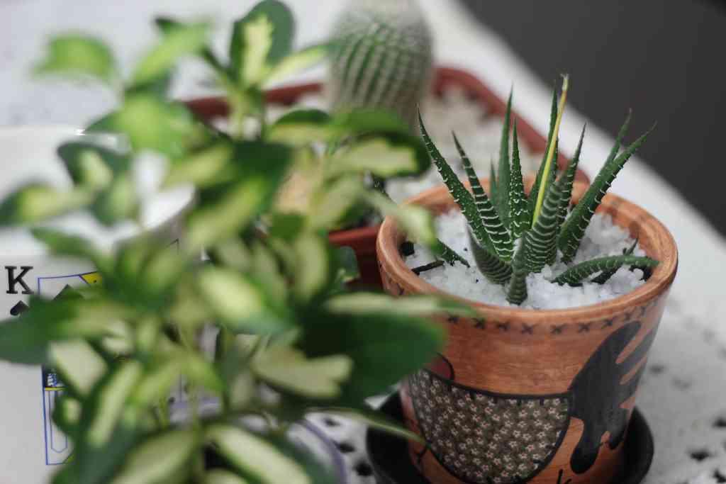 Feng Shui Velas Baño:Plantas que tienes que tener en base al Feng Shui