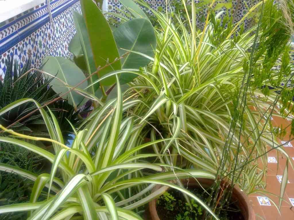 Ideas en base al feng shui para tus plantas for Plantas para tener en casa segun el feng shui