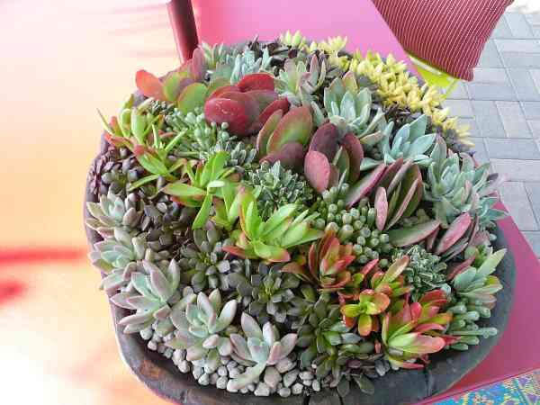 Ideas de suculentas para tu jardín