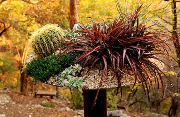 Colores para las suculentas para tu jardín