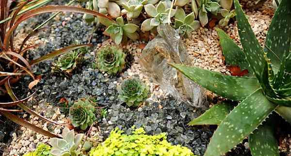 bonitas suculentas para tu jardín