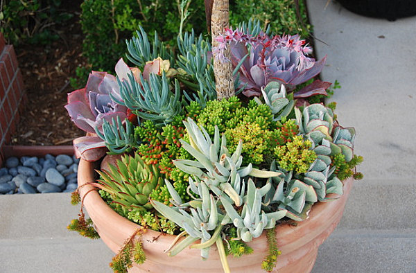 diferentes suculentas para tu jardín