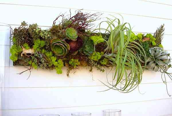 Ideas para las suculentas para tu jardín