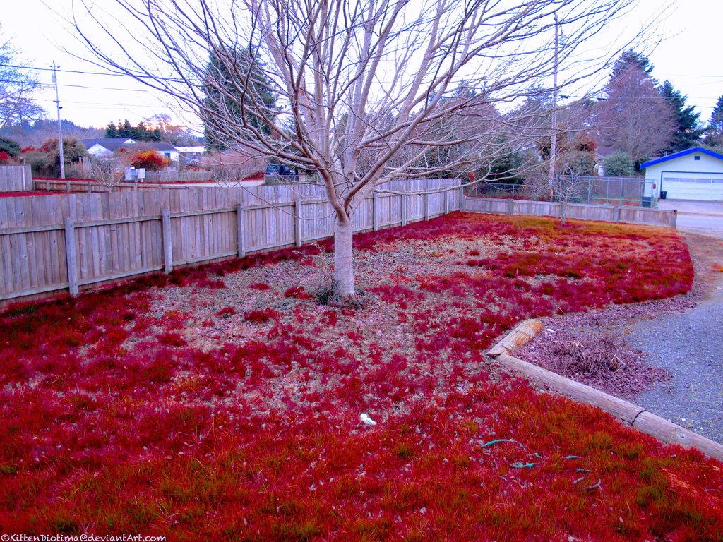 jardin decorado con un cesped teñido en color rojo