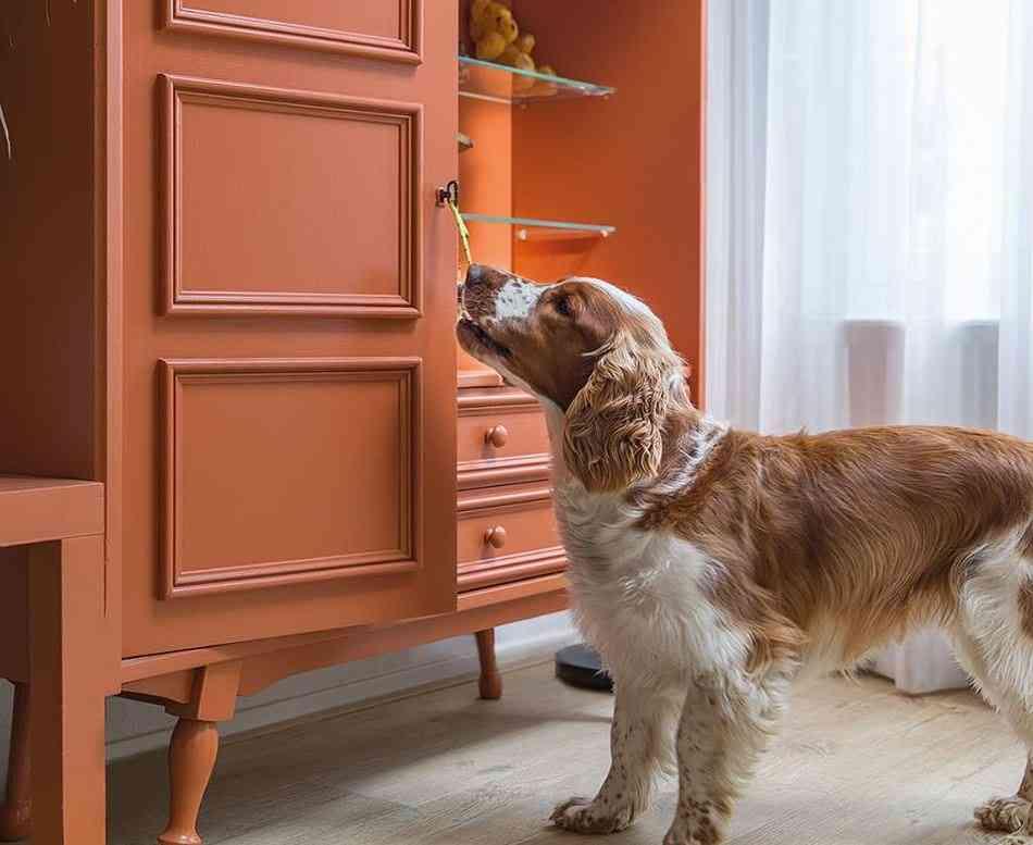 animales domesticos y suelos de madera 4