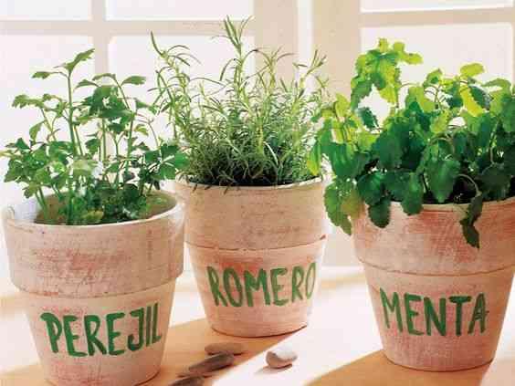 decorar con hiervas aromaticas I