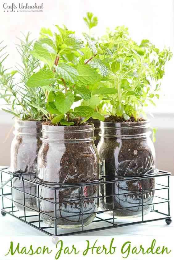 decorar con hiervas aromaticas VIII