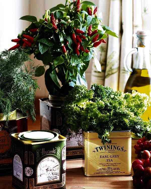 decorar con hiervas aromaticas XII