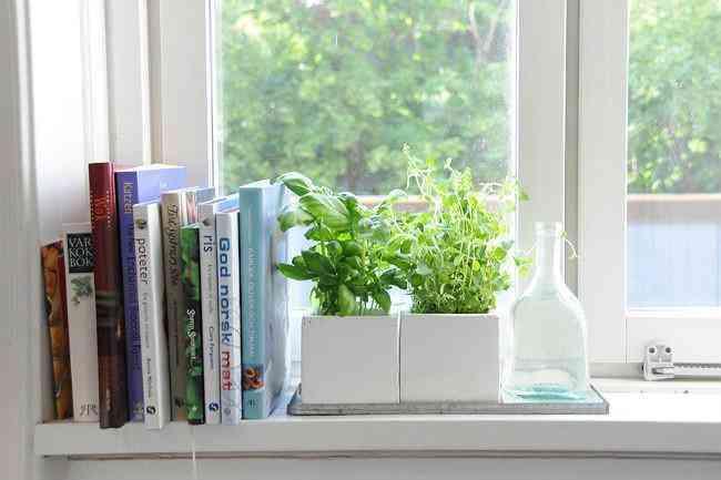 decorar con hiervas aromaticas XIII