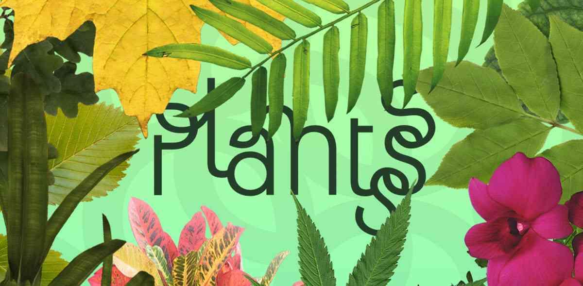 Resultado de imagen de Estas son las mejores aplicaciones creadas para identificar plantas y flores