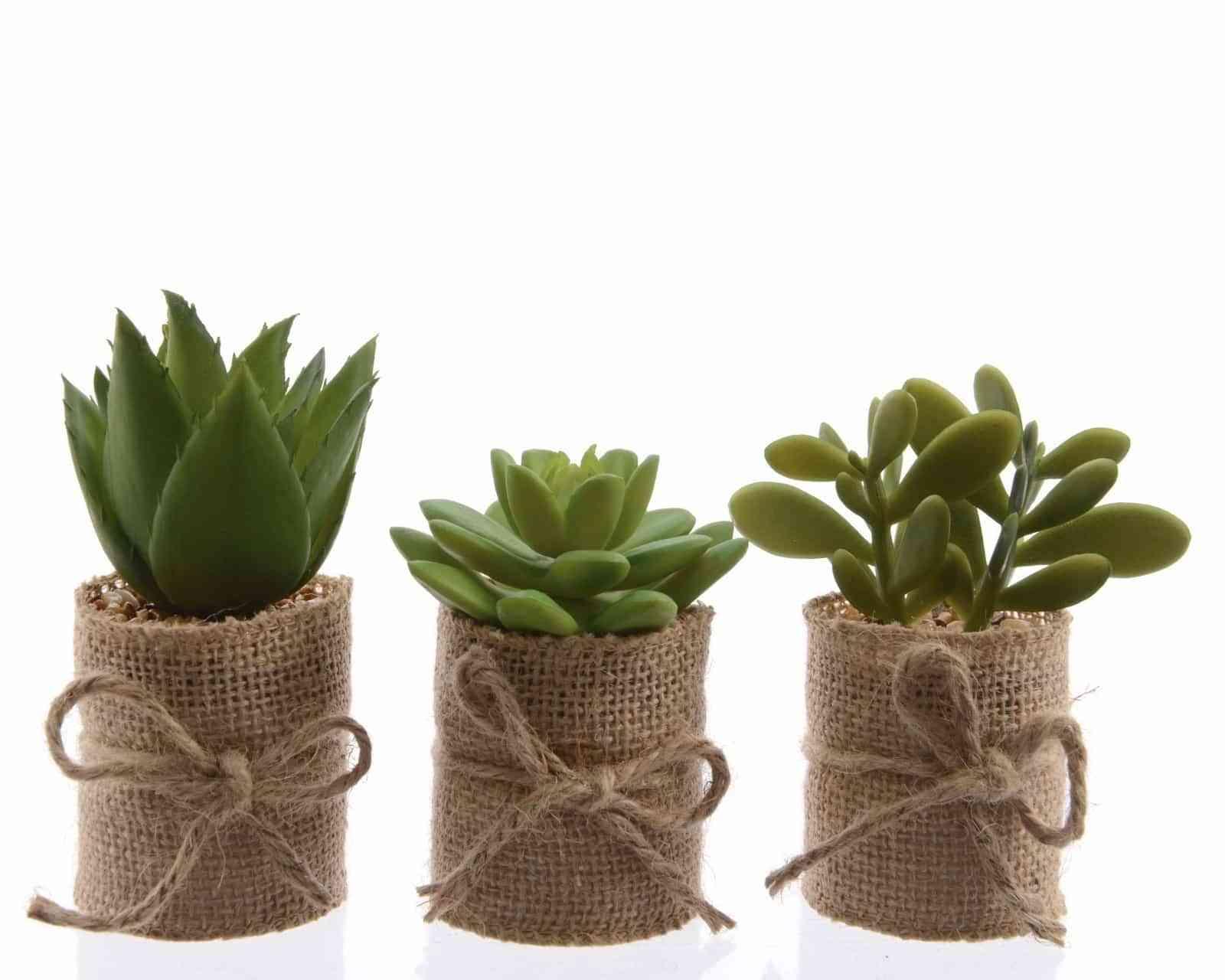 cactusmania-decorar-con-cactus-7