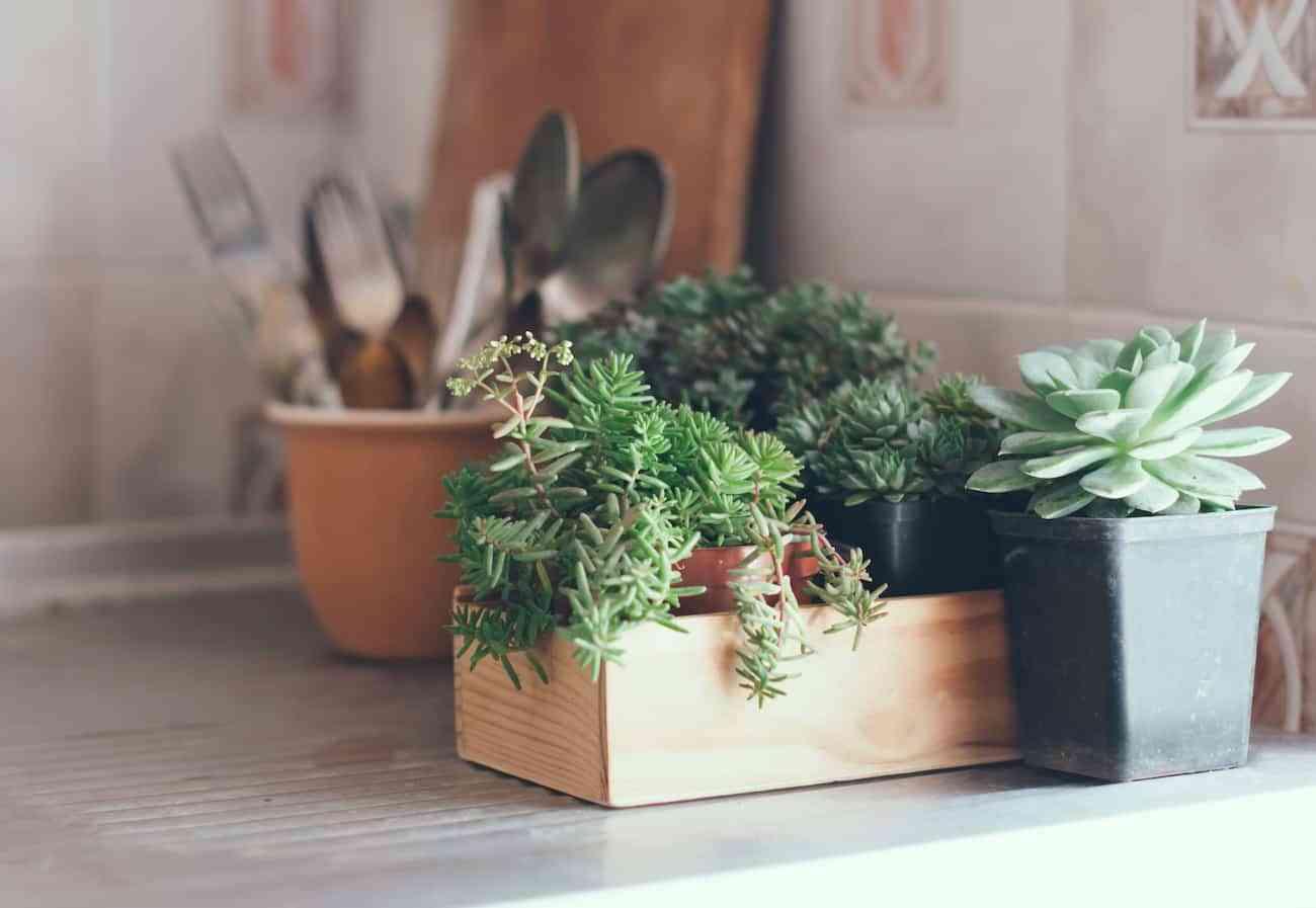 decorar con cactus tu cocina