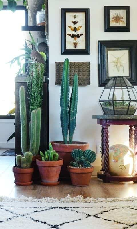 decorar con plantas II
