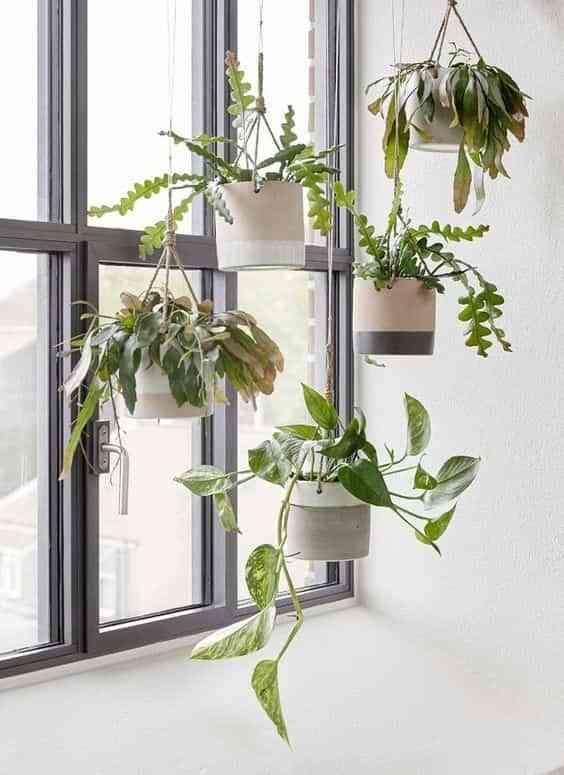 decorar con plantas III