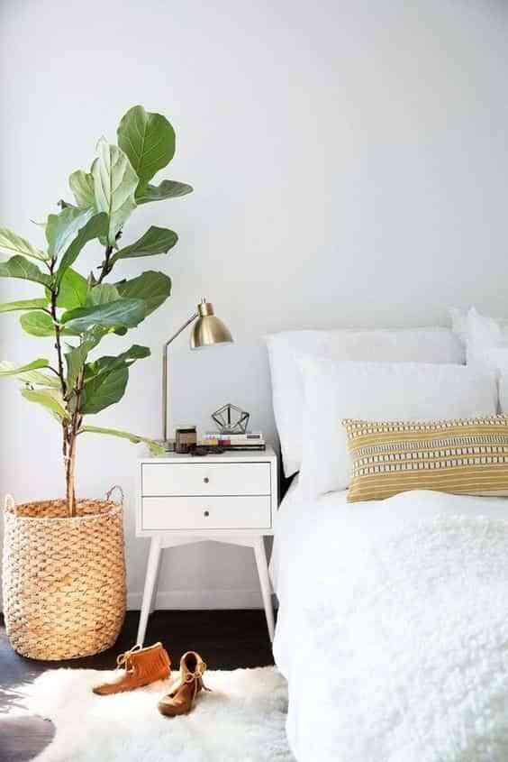 decorar con plantas VII