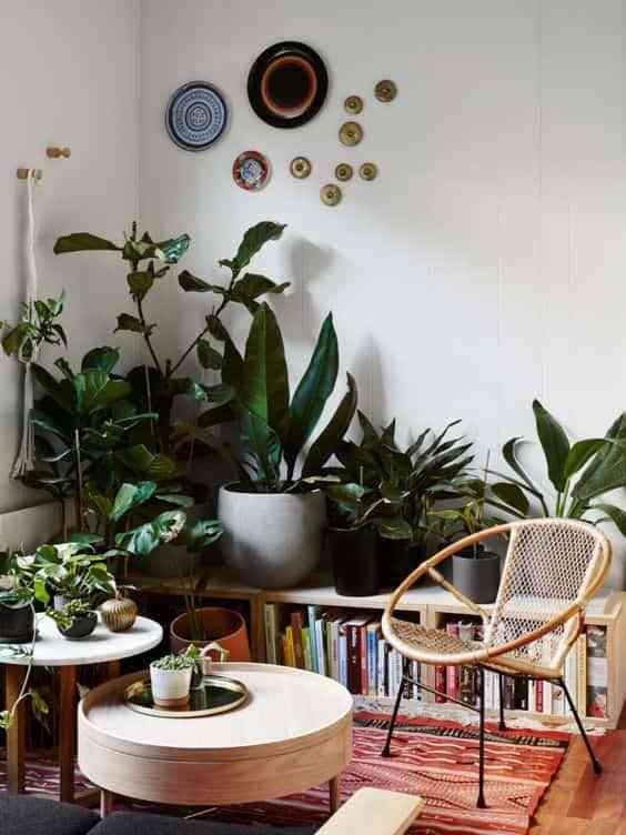 decorar con plantas VIII
