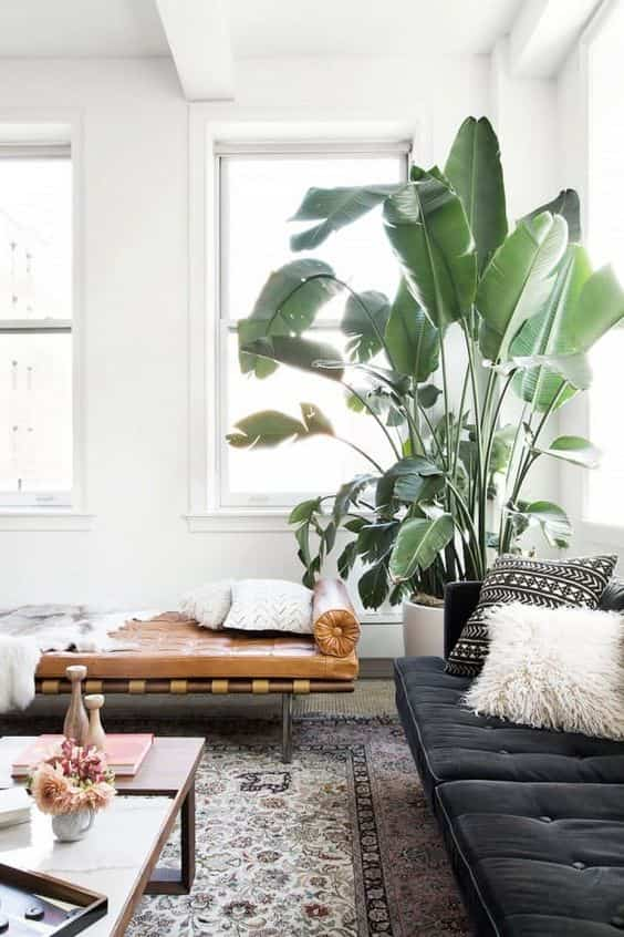 Decorar con plantas. ¡Ideas para llenar tu casa de vida!