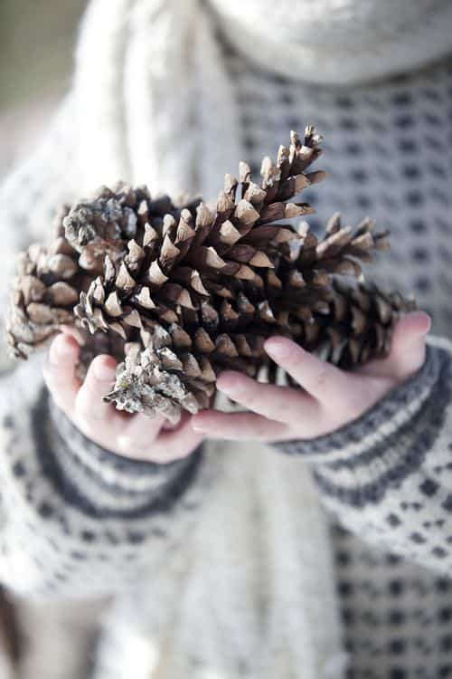decorar con pinas