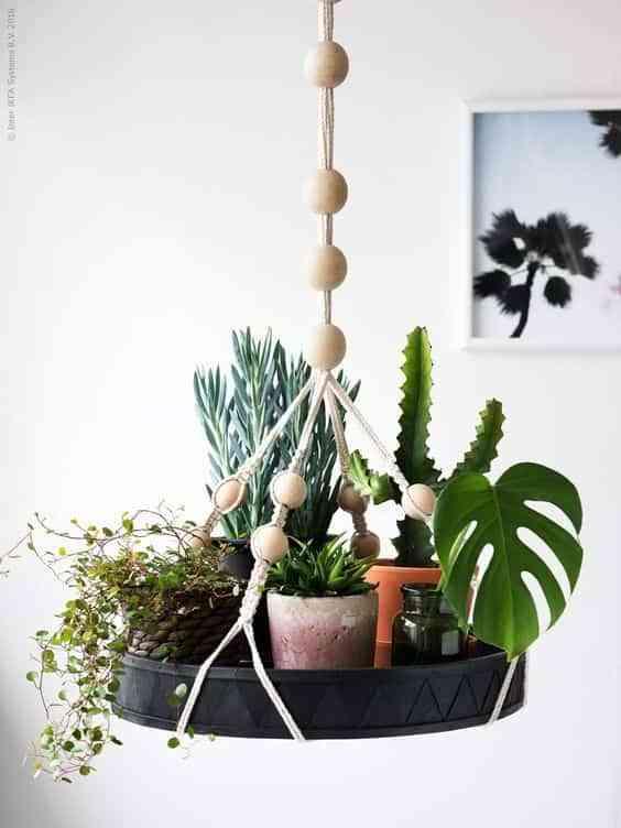 plantas colgadas II