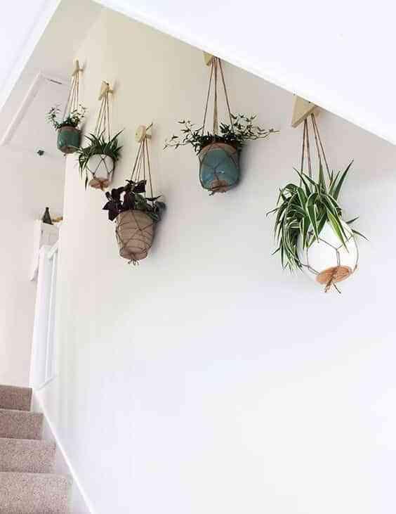 plantas colgadas VI