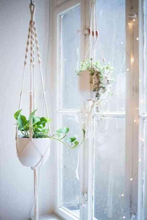 plantas colgadas VIII