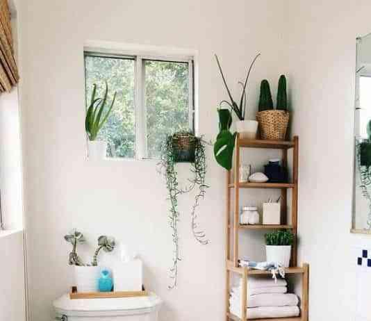 Plantas y flores archives decoraci n de interiores opendeco - Plantas en el bano ...