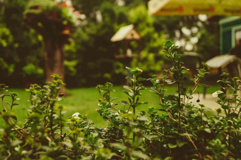 Lo que no debe faltar en el jardín de tu casa 1