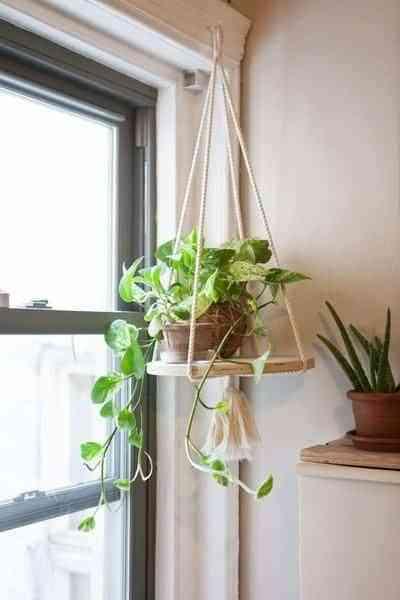 decorar el interior de las ventanas con plantas IV
