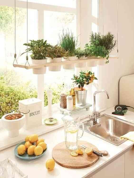 decorar el interior de las ventanas con plantas VI