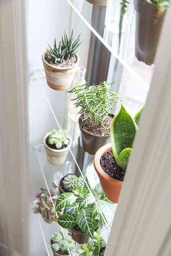 decorar el interior de las ventanas con plantas