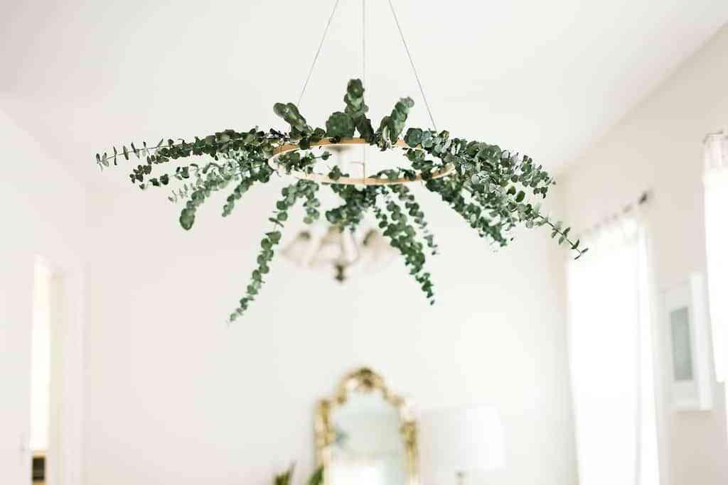 decorar con eucalipto VI