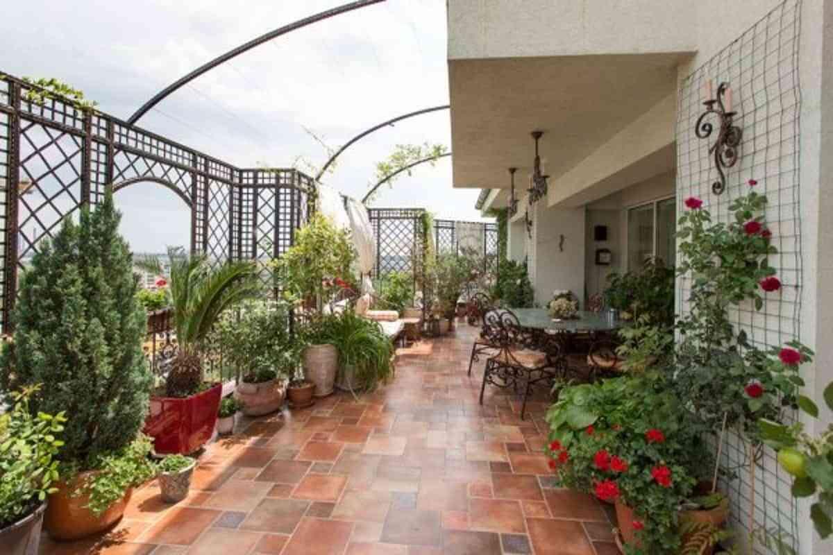 plantas decoran y brindan privacidad