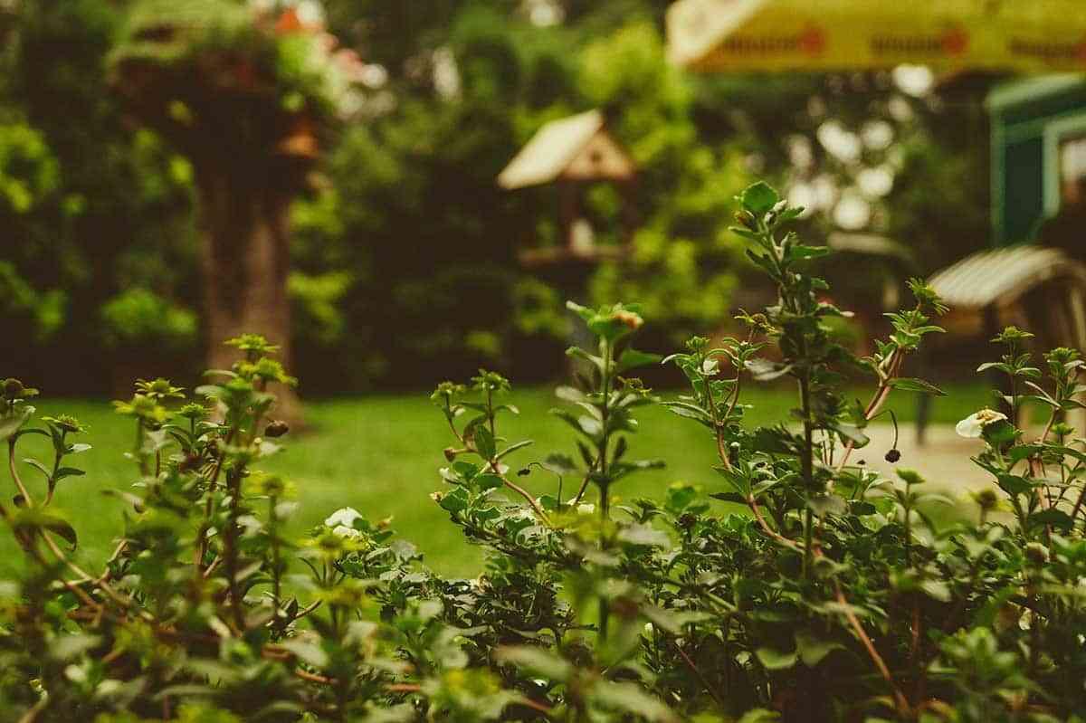 La maquinaria que no puede faltar en tu jardín 1