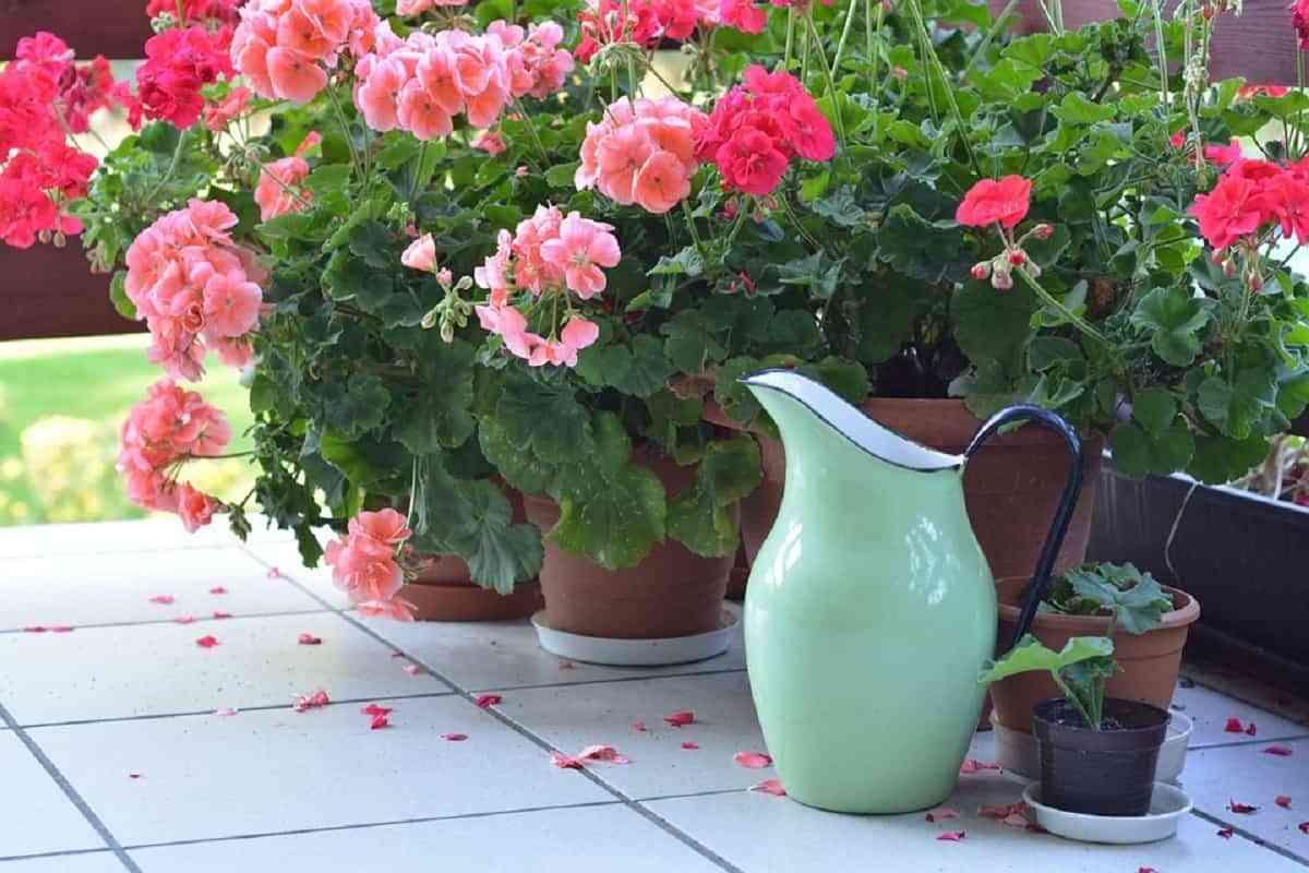 """¿Cómo decorar tu jardín o terraza en otoño"""""""