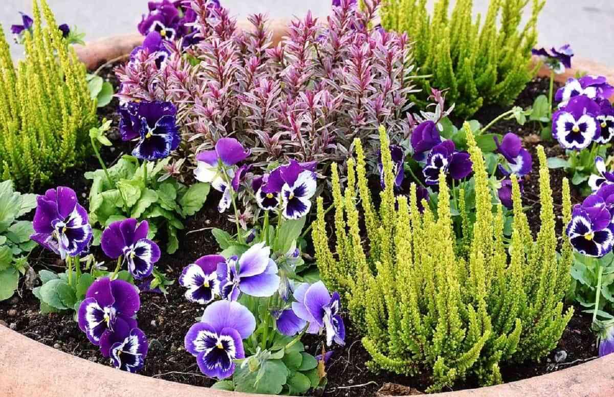 Indispensable en el jardín colocar plantas y flores de variedad